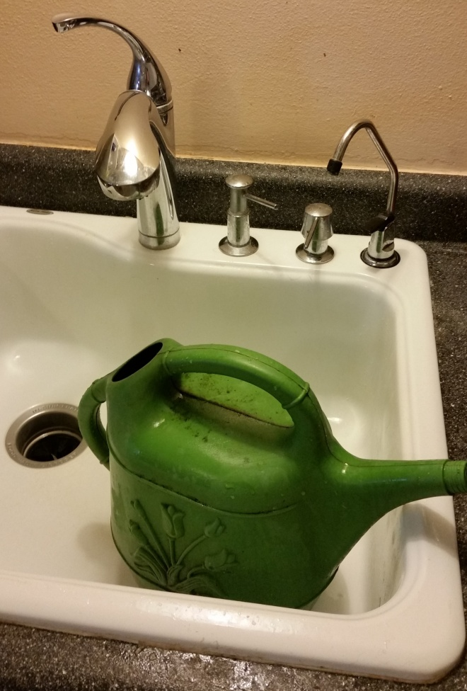 Watering can to collect gray water