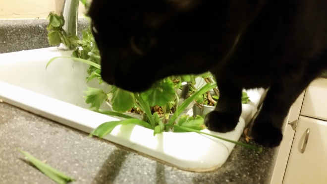 lilo the cat eating houseplants
